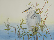John Edebohls - Heron Waiting For Dinner
