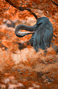 Herons Photos - Heron Wonderland v3 by Douglas Barnard