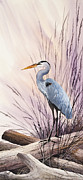 James Williamson Bird Prints Prints - Herons Driftwood Home Print by James Williamson