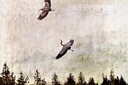 Nature Photos Mixed Media Posters - Herons in Flight Monotone Poster by Peggy Collins