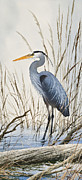 Wildlife Art Greeting Cards Framed Prints - Herons Natural World Framed Print by James Williamson