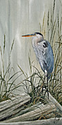 James Williamson Bird Prints Prints - Herons Quiet Rest Print by James Williamson