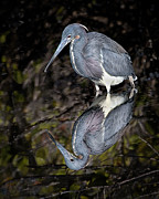 Will Abair - Heron