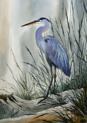 James Williamson - Herons Sheltered Retreat