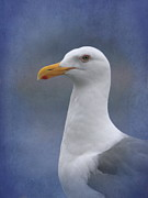 Blue And Orange Photos - Herring Gull by Angie Vogel