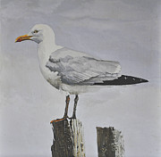 Sea Birds Paintings - Herring Gull by Lesly Holliday