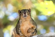 Chippy Photos - Hey Its Me by Ester  Rogers