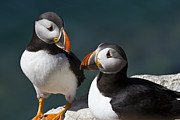 Puffin Metal Prints - Hey we should go fishing Metal Print by Heiko Koehrer-Wagner