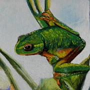 Tree Frog Pastels Prints - Hey You Print by Sandra Sengstock-Miller