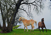 Stallions Digital Art - Hiawathas Horses by Skye Ryan-Evans