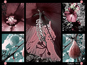 Stamen Digital Art Framed Prints - Hibiscus and Fig Collage Framed Print by David Smith
