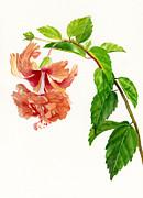 Hibiscus El Capitolio Sport Print by Sharon Freeman