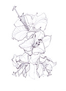 Aloha Drawings - Hibiscus Flower by Yana Vergasova