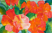 Florida Flowers Paintings - Hibiscus Flowers by Michelle Wiarda