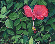 Linda Feinberg - Hibiscus in Costa Rica