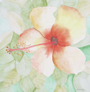 Botanical Drawings - Hibiscus by John Edebohls