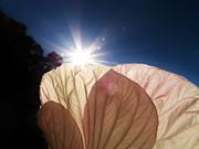 Judy Via-Wolff - Hibiscus Landscape 2