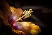 Mallow Photos - Hibiscus Macro by Julie Palencia