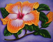 Paula L - Hibiscus
