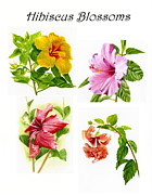 Hibiscus Poster With Script Print by Sharon Freeman