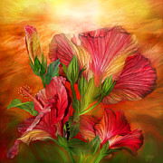 Tropical Sunset Framed Prints - Hibiscus Sky - Red and Gold Tones Framed Print by Carol Cavalaris
