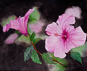 Sher Nasser - Hibiscus - So Pretty in...