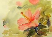Todd Derr - Hibiscus