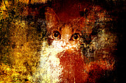 Kittens Mixed Media Prints - Hidden Print by Andee Photography
