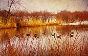 Geese Digital Art Posters - Hidden Sanctuary  Poster by Shawna  Rowe