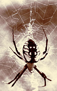 Photography By Govan; Vertical Format Prints - Hidden Spider Print by Andrew Govan Dantzler