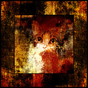Kittens Mixed Media Prints - Hidden Square Print by Andee Photography