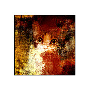 Kittens Mixed Media Prints - Hidden Square White Frame Print by Andee Photography