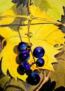 Grape Leaves Drawings Posters - Hidden Treasure Poster by Glen Sanders