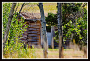 Cabin Wall Framed Prints - Hidden Wyoming Cabin Framed Print by Janice Rae Pariza