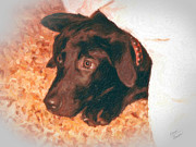 Black Lab Digital Art - Hide-and-Seek by Charles Thayer