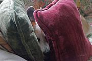 Sarine Anderson - Hide and Sleep