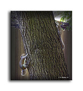 Frisky Photo Posters - Hide and Seek Squirrels Poster by Brian Wallace