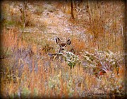 Gore Range Photos - Hiding Deer by Danielle Marie