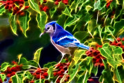 Bluejay Digital Art Posters - Hiding in the Berries Poster by Stephen Younts