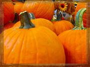 Judy Hall-Folde - Hiding in the Pumpkin Patch