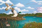 Mallards Paintings - Hiding Out by Katherine Young-Beck