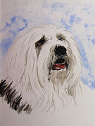 Sheepdog Paintings - Higgins by Carol Blackhurst