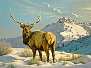 High Country Bull Print by Paul Krapf