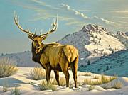 High Country Bull Print by Paul Krapf