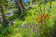 Little Lakes Valley Framed Prints - High Country Wildflowers - Fine Art by Lynn Bauer Framed Print by Lynn Bauer