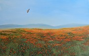 Red Tail Hawk Art - High Desert Poppies by Gina DeRuggiero