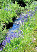 Vicki Coover - High Mtn Creek w Lupine