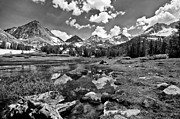 White Mountains Photos - High Sierra Meadow by Cat Connor