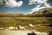 Bonnie Bruno - High Sierras Meadow