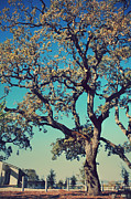 Oak Trees Prints - High Spirits Print by Laurie Search